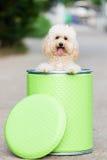 Σκυλί που εξετάζει τη κάμερα Στοκ φωτογραφία με δικαίωμα ελεύθερης χρήσης