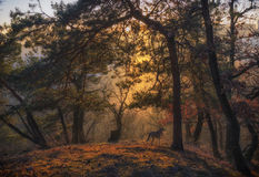 Σκυλί που εξετάζει το δάσος στοκ εικόνες