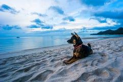 Σκυλί που κοιτάζει επίμονα στον ορίζοντα Στοκ εικόνα με δικαίωμα ελεύθερης χρήσης