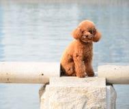 σκυλί που κουράζεται Στοκ Εικόνα