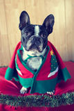 Σκυλί που ντύνεται για τα Χριστούγεννα Στοκ Φωτογραφία