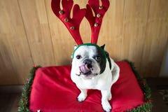 Σκυλί που ντύνεται για τα Χριστούγεννα Στοκ εικόνες με δικαίωμα ελεύθερης χρήσης