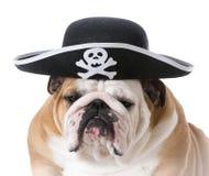 σκυλί που ντύνεται επάνω όπως έναν πειρατή Στοκ φωτογραφίες με δικαίωμα ελεύθερης χρήσης