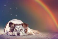 Σκυλί που ξαπλώνει κάτω από τα αστέρια και το ουράνιο τόξο Στοκ Εικόνες