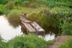 Σκυλί που οργανώνεται κοντά στο νερό Στοκ Εικόνες
