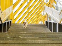 Σκυλί που περπατά μόνο στη σκάλα της γέφυρας με τη ριγωτή στέγη Στοκ φωτογραφία με δικαίωμα ελεύθερης χρήσης