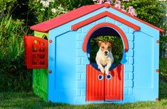 Σκυλί που πηδά από το ζωηρόχρωμο σπίτι στην παιδική χαρά στον κήπο Στοκ φωτογραφίες με δικαίωμα ελεύθερης χρήσης