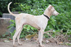Σκυλί που προσέχει μερικούς ξένους στοκ φωτογραφίες