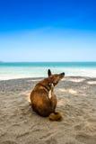 Σκυλί που προσέχει την άποψη θερινών διακοπών σχετικά με την παραλία Στοκ Φωτογραφία