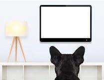 Σκυλί που προσέχει τη TV Στοκ εικόνες με δικαίωμα ελεύθερης χρήσης
