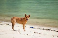Σκυλί που προσέχει τις θερινές διακοπές στην παραλία Στοκ φωτογραφίες με δικαίωμα ελεύθερης χρήσης