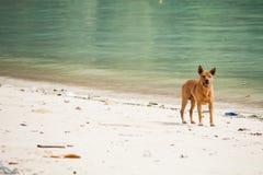 Σκυλί που προσέχει τις θερινές διακοπές στην παραλία Στοκ Εικόνα
