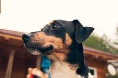 Σκυλί που σκέφτεται και που προσέχει για το μέλλον στοκ εικόνες με δικαίωμα ελεύθερης χρήσης