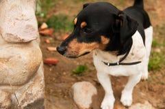 Σκυλί που σκέφτεται και που προσέχει για το μέλλον στοκ εικόνα με δικαίωμα ελεύθερης χρήσης