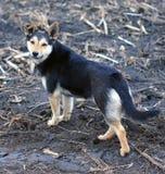 Σκυλί που στέκεται μόνο Στοκ εικόνα με δικαίωμα ελεύθερης χρήσης
