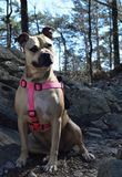 Σκυλί που στα ίχνη βουνών στοκ εικόνες