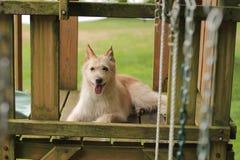 Σκυλί που στηρίζεται στην παιδική χαρά Στοκ Φωτογραφίες