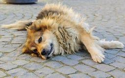 Σκυλί που το θερμό φως της ανατολής στοκ εικόνες