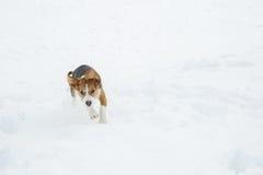 Σκυλί που τρέχει και που πηδά μέσω του χιονιού σε ένα χειμερινό τοπίο Στοκ φωτογραφία με δικαίωμα ελεύθερης χρήσης