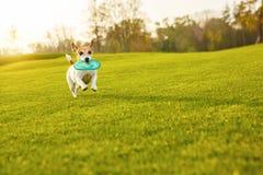 Σκυλί που τρέχει στην πράσινη χλόη Στοκ Φωτογραφία