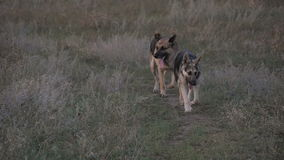 Σκυλί που τρέχει στο δρόμο απόθεμα βίντεο