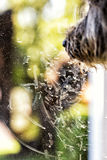 Σκυλί που φαίνεται έξω παράθυρο με τις τυπωμένες ύλες μύτης Στοκ Εικόνα