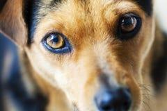 Σκυλί που φαίνεται κινηματογράφηση σε πρώτο πλάνο πορτρέτου στοκ εικόνα με δικαίωμα ελεύθερης χρήσης