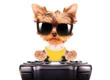Σκυλί που φορά ένα παιχνίδι σκιών στο μαξιλάρι παιχνιδιών Στοκ εικόνες με δικαίωμα ελεύθερης χρήσης