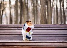 Σκυλί που φορά την άνετη θερμή συνεδρίαση μαντίλι στον πάγκο στο πάρκο Στοκ φωτογραφία με δικαίωμα ελεύθερης χρήσης
