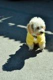 Σκυλί που φορά το πουκάμισο Στοκ εικόνα με δικαίωμα ελεύθερης χρήσης