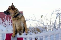 Σκυλί σε έναν φράκτη Στοκ φωτογραφία με δικαίωμα ελεύθερης χρήσης
