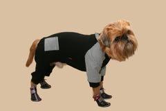 Σκυλί σε ένα ελαφρύ υπόβαθρο στοκ εικόνες