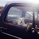 Σκυλί σε ένα παλαιό ανοιχτό φορτηγό Στοκ Φωτογραφίες