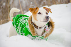 Σκυλί σε ένα πράσινο παλτό στο χιόνι Στοκ φωτογραφίες με δικαίωμα ελεύθερης χρήσης