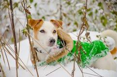 Σκυλί σε ένα πράσινο παλτό Στοκ φωτογραφία με δικαίωμα ελεύθερης χρήσης