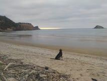 Σκυλί σε μια παραλία Στοκ Εικόνα