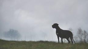 Σκυλί σε μια υδρονέφωση στοκ εικόνες με δικαίωμα ελεύθερης χρήσης