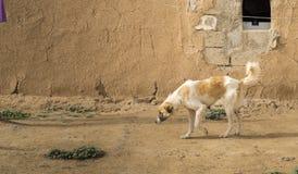 Σκυλί σε υπαίθριο Στοκ φωτογραφία με δικαίωμα ελεύθερης χρήσης