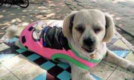 Σκυλί σκυλιών σκυλιών Στοκ φωτογραφίες με δικαίωμα ελεύθερης χρήσης