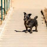 Σκυλί στα βήματα στον τρόπο επάνω Στοκ Φωτογραφία