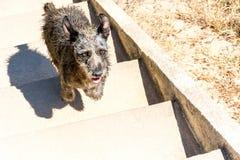 Σκυλί στα βήματα στον τρόπο επάνω Στοκ Εικόνα