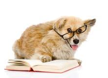 Σκυλί στα γυαλιά που διαβάζονται το βιβλίο εξέταση τη κάμερα απομονωμένος στο άσπρο β Στοκ εικόνα με δικαίωμα ελεύθερης χρήσης