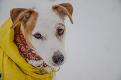 Σκυλί στα κίτρινα ενδύματα Στοκ Εικόνες