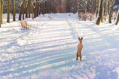Σκυλί στα οπίσθια πόδια το χειμώνα Στοκ φωτογραφία με δικαίωμα ελεύθερης χρήσης
