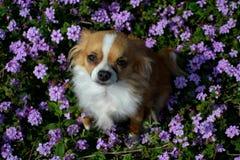 Σκυλί στα λουλούδια στοκ φωτογραφία με δικαίωμα ελεύθερης χρήσης