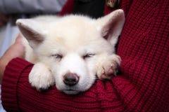 Σκυλί στα όπλα Στοκ Φωτογραφίες