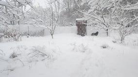 Σκυλί στην επαρχία στα χειμερινά άλματα σε ένα wicket και απόθεμα βίντεο