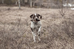 Σκυλί στην κίνηση Στοκ εικόνα με δικαίωμα ελεύθερης χρήσης