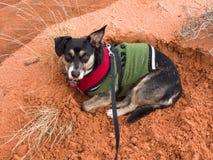 Σκυλί στην κόκκινη άμμο Στοκ εικόνα με δικαίωμα ελεύθερης χρήσης