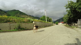 Σκυλί στην οδό απόθεμα βίντεο